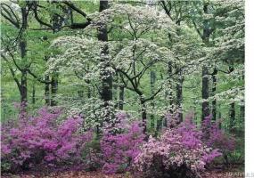 420 PLANTATION Crossing, Millbrook, Alabama, ,Lots/acreage & farms,For Sale,PLANTATION,290500